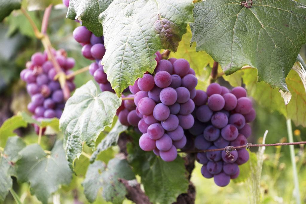 Olivia Galy Expertises - Monde agricole et viticole